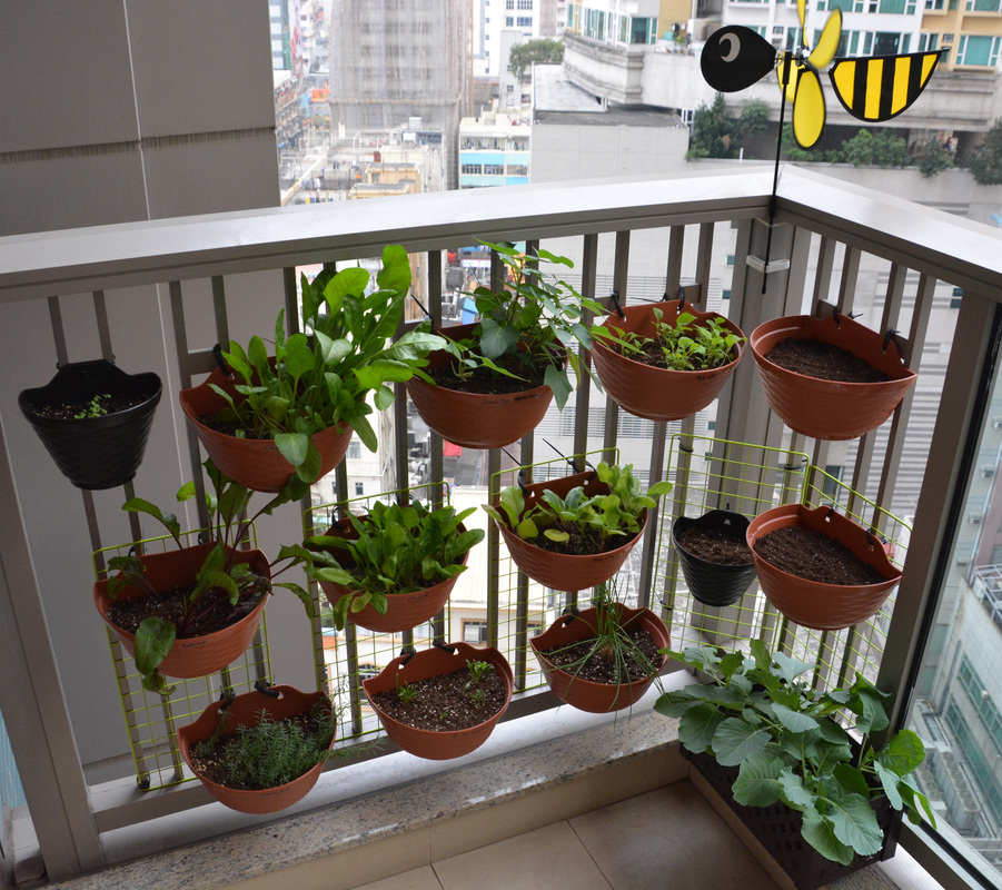 Garden Balconies: Balcony Garden (March 2016)